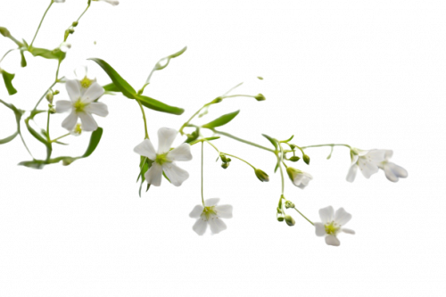 flowers-3655451...