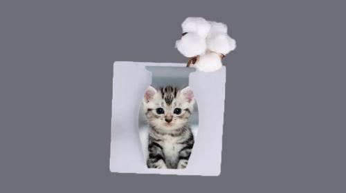 cute cat...